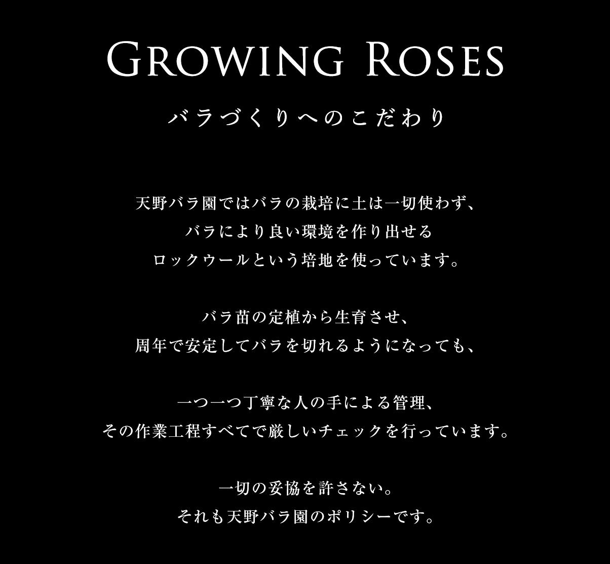 バラづくりへのこだわり/妥協を排除したらこうなりました。天野バラ園ではバラの栽培に土は一切使わず、バラにより良い環境を作り出せるロックウールという培地を使っています。バラ苗の定植から生育させ、周年で安定してバラを切れるようになっても、一つ一つ丁寧な人の手による管理、その作業工程すべてで厳しいチェックを行っています。一切の妥協を許さない。それも天野バラ園のポリシーです