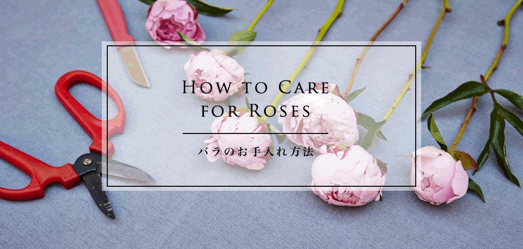 バラのお手入れの方法